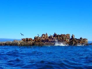 La Loberia - Southern Sea Lion Haul Out